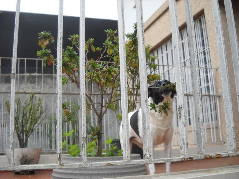 Total Imóveis - Casa 2 Dorm, Vila Mascote (337423) - Foto 4