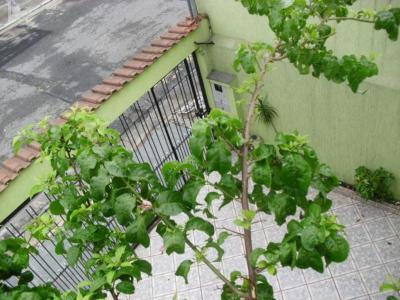 Casa Sobrado à venda, Jardim Lisboa, São Paulo