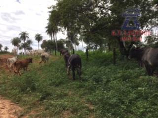 oportunidade rara: vende-se uma fazendinha, com a área de 87,13 hectares, banhada por 02 rios perenes,...