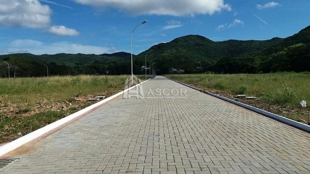 Terreno, Ratones, Florianópolis (TE0115) - Foto 3