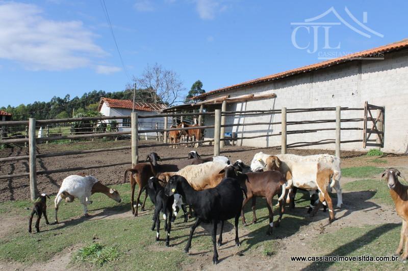 espetacular mini fazenda com 11 alqueires totalmente aproveitáveis, diversas arvores frutíferas, redondéis, curral de boi com...