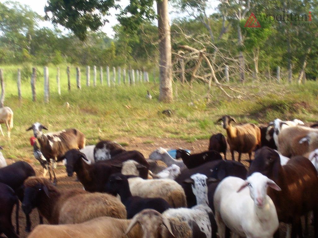 fazenda com área total de 438.74 hectares, localizada no município de poconé - mt, na br-...