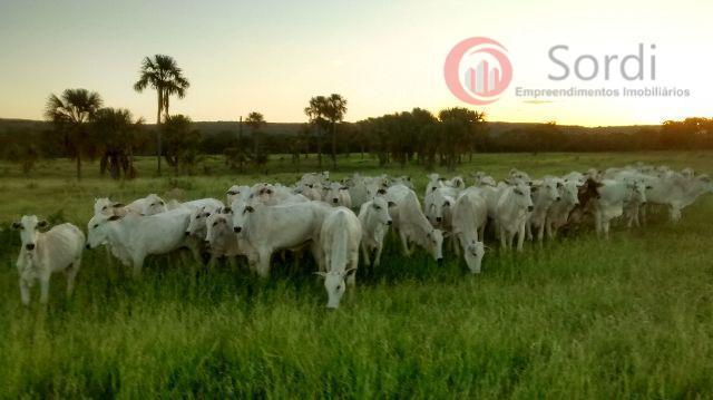 Fazenda rural à venda, Zona Rural, Riachinho.
