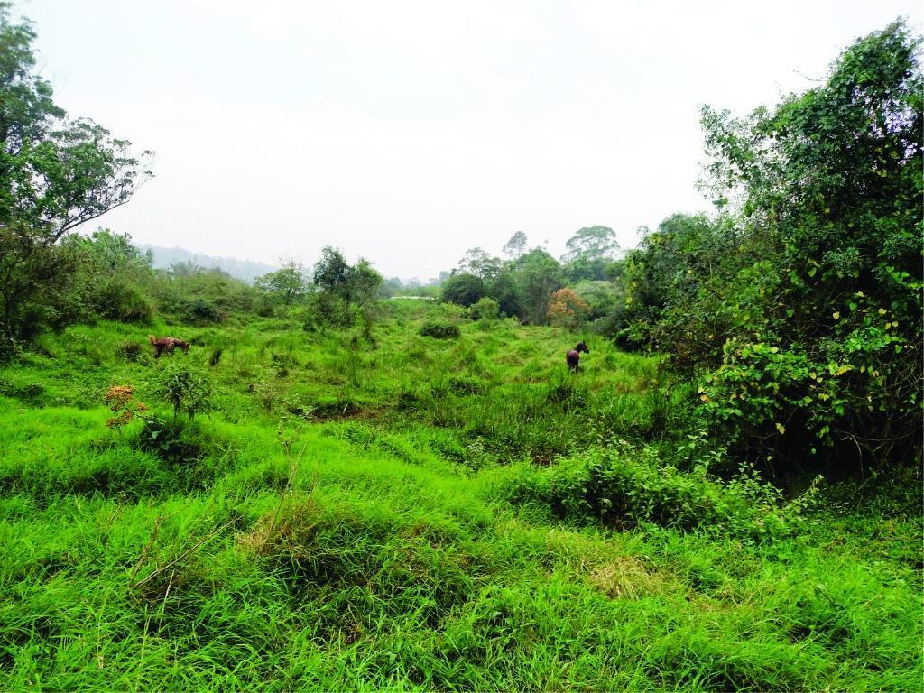 Terreno residencial à venda, Jardim Restinga, Suzano.