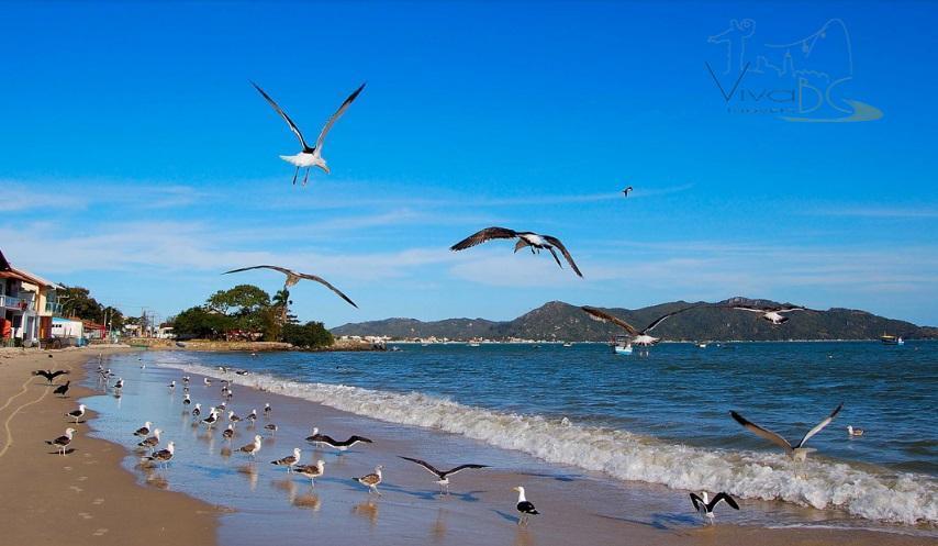 Um dos últimos terrenos próximos ao mar na praia mais charmosa do atlântico sul - Bombas um paraíso ecológico que pode ser seu!