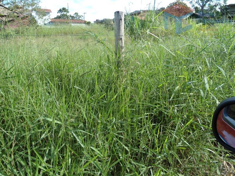 Terreno no Campeche - Viabilidade para Prédio