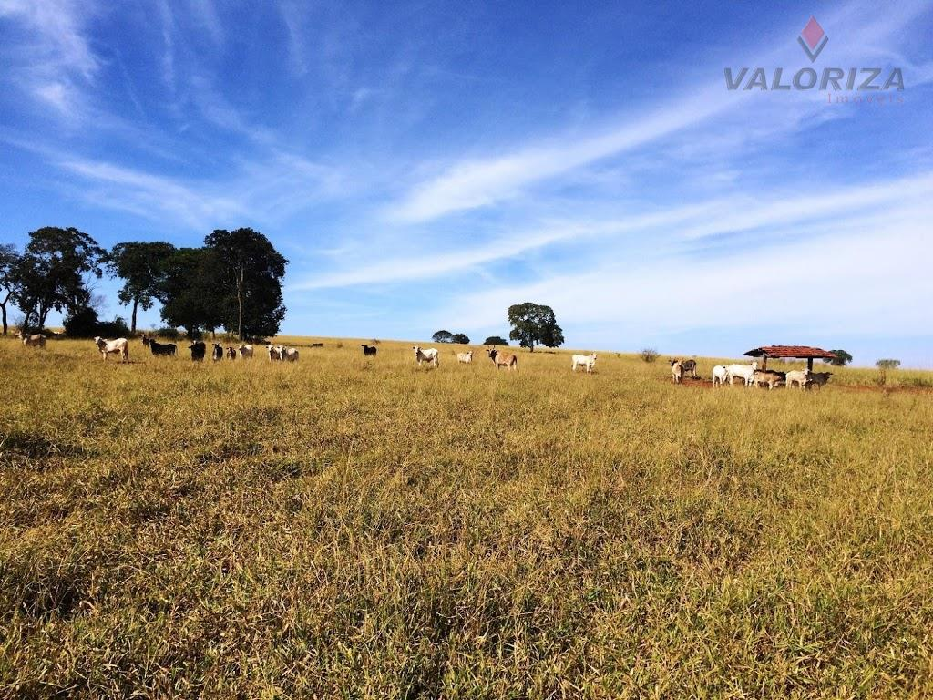 Sítio 9,5 Alqueires, Zona Rural, Quirinópolis.