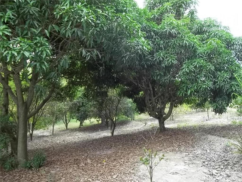 Chácara residencial à venda, Parque Dante Marmiroli, Sumaré.