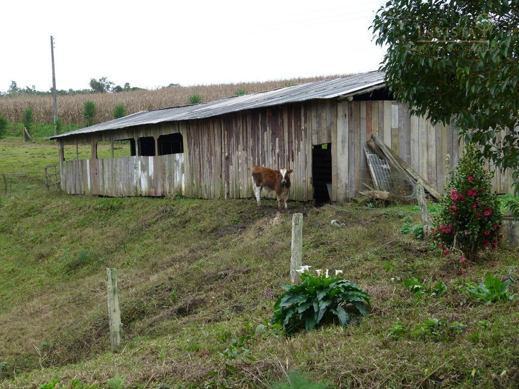 Sítio de 3 dormitórios à venda em Rio Engano, Alfredo Wagner - SC