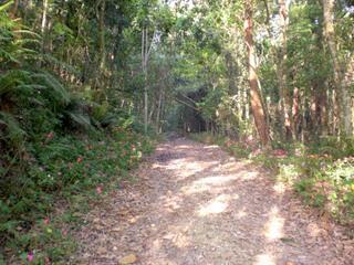 Terreno em Fazendinha, Carapicuíba - SP