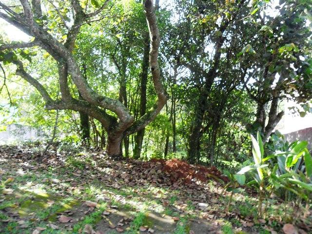 Terreno em Vila De São Fernando, Cotia - SP