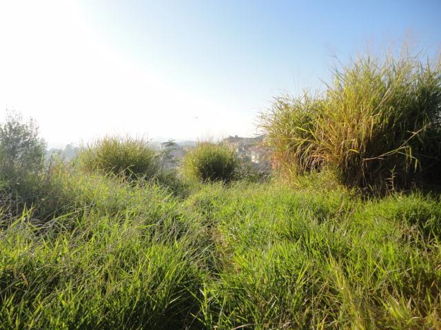 Terreno à venda em Parque Rizzo Ii, Cotia - SP
