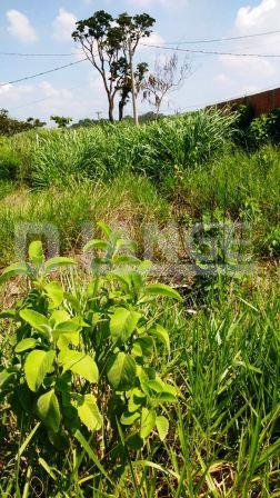 Terreno em Jardim Santa Maria Ii, Campinas - SP