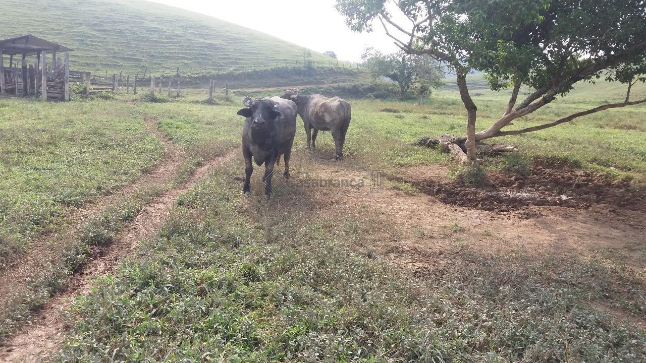 # 46 alqueires paulista;# documentação 100% ok;# 70 búfalas leiteiras (ficam);# com 40 alqueires de pasto;#...