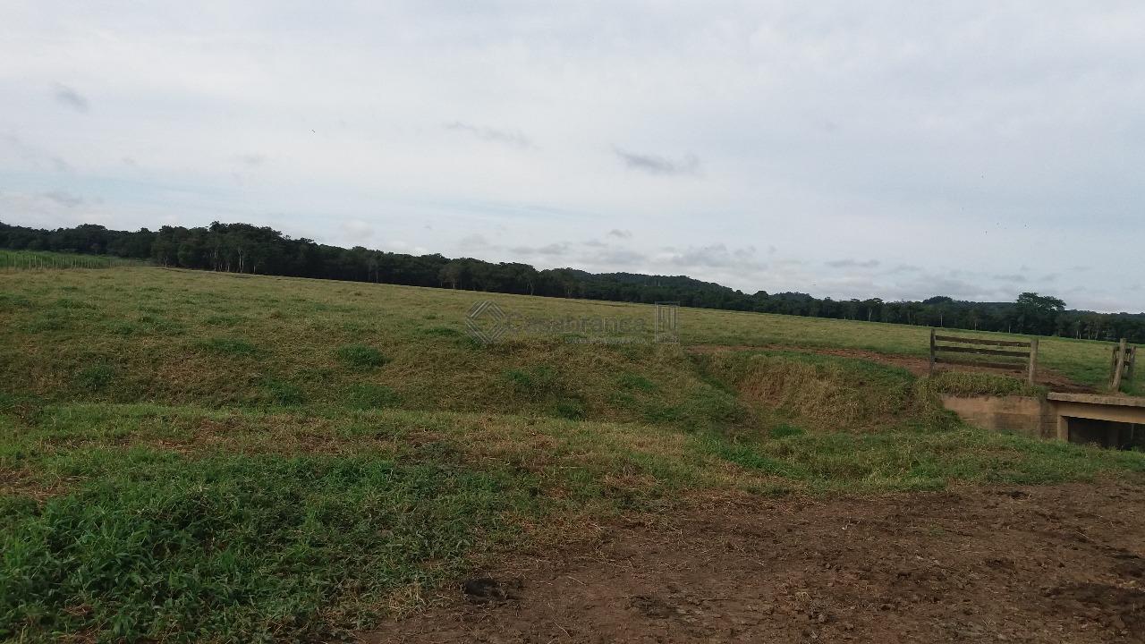 # 82 alqueires;# terra para agricultura de banana e pasto formado; # pasto para 400 cabeças...