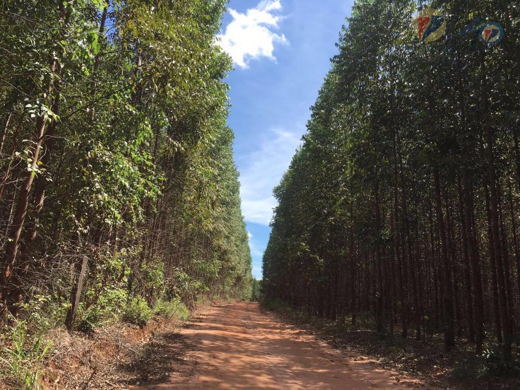 Fazenda rural à venda, Zona Rural, Ponte Firme (Presidente Olegário).