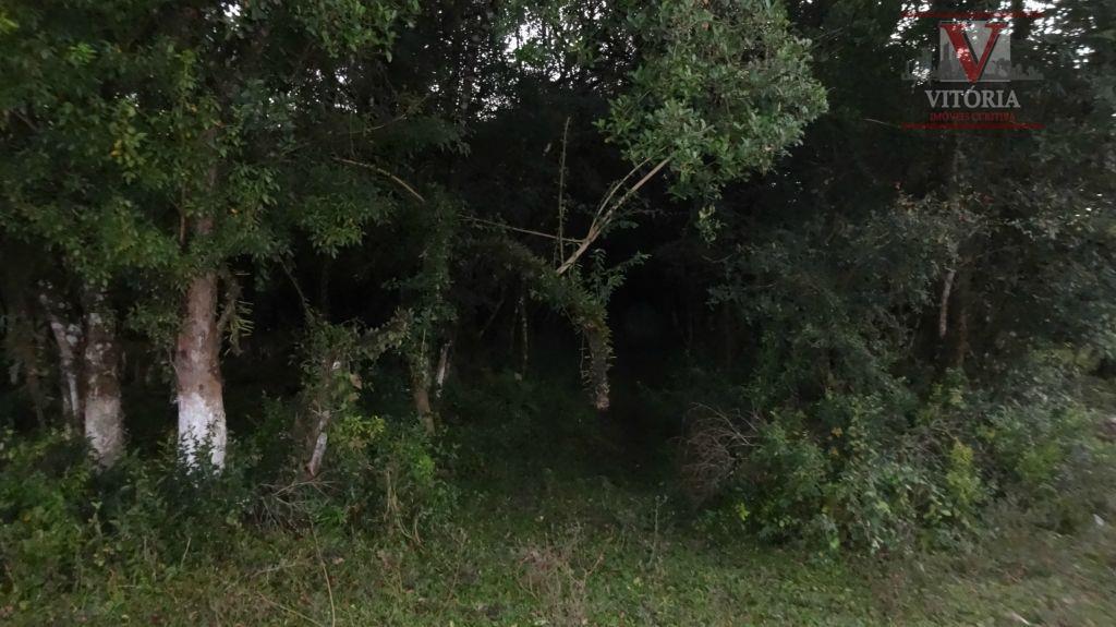 Terreno 2.620m² à venda, Colônia Murici, São José dos Pinhais - TE0072.