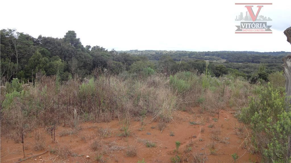 Terreno residencial à venda, Barro Preto, São José dos Pinhais - TE0042.