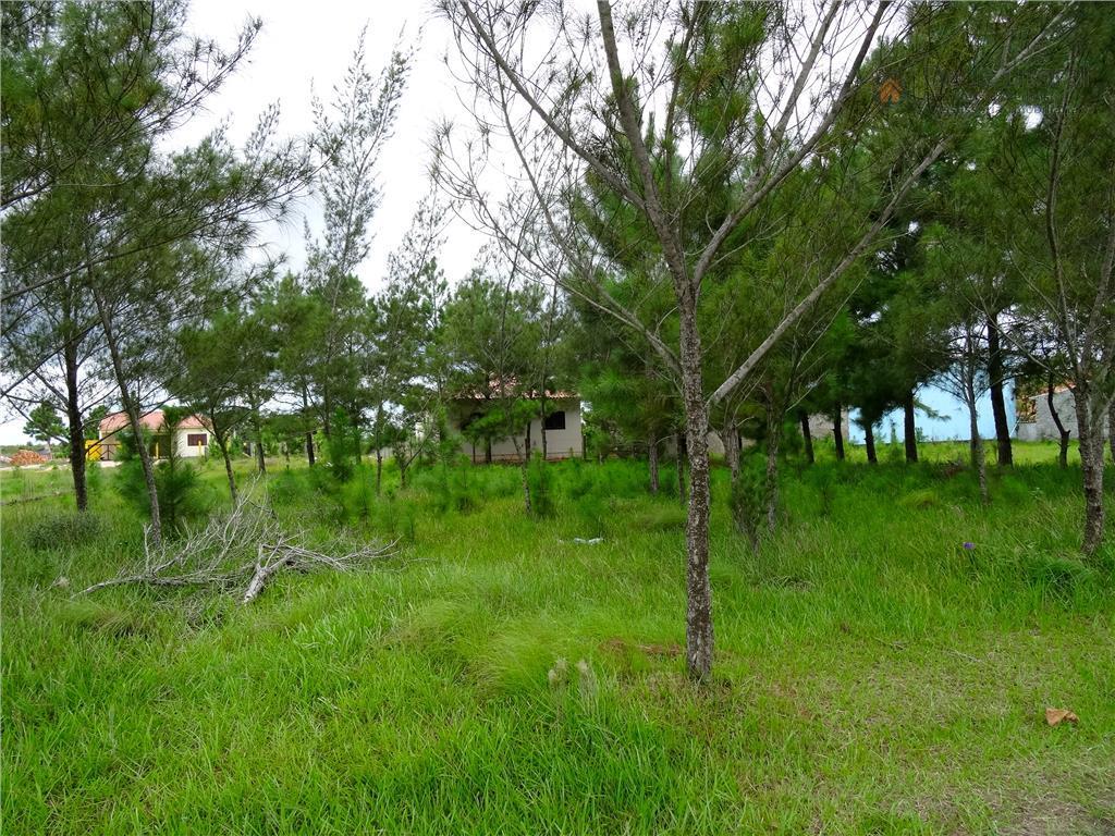 terreno na praia do paraíso em torres, excelente terreno pronto para construir, plano, aterrado e arborizado,...