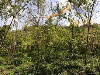 Sítio  rural à venda, Cubatão, Marmelópolis.