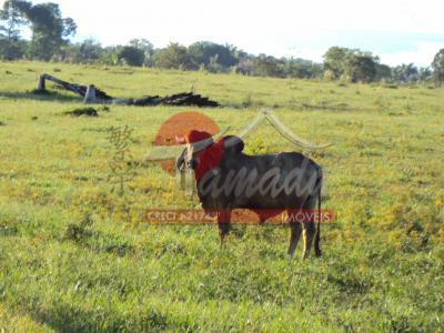 Fazenda de 3 dormitórios à venda em Japiim, Manaus - AM